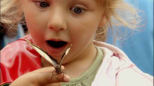 child.amazed.butterfly