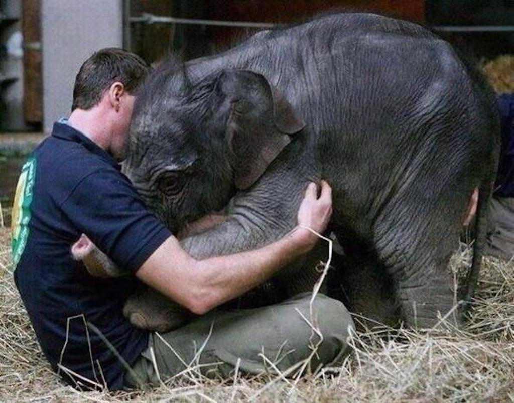 elephant_hug