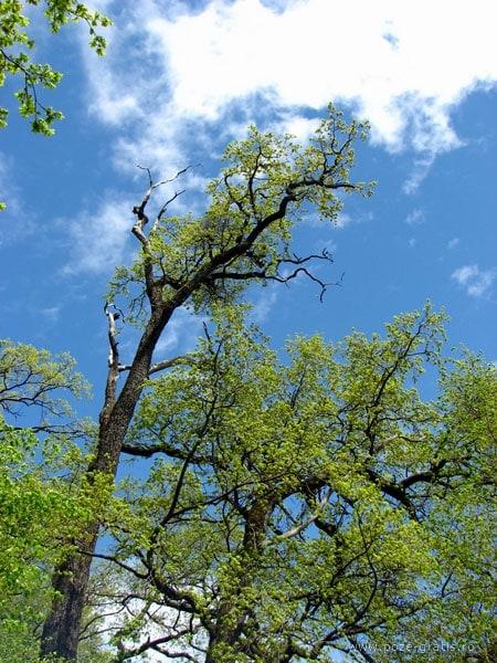 copac insorit